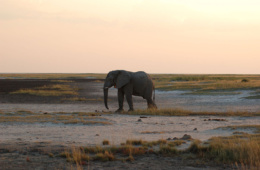 Skeleton Coast Safari combined with Sossusvlei and the Etosha National Park