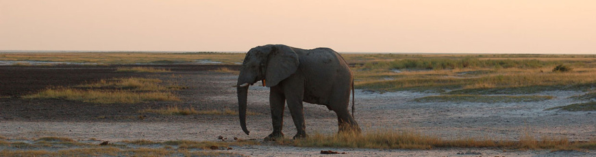 (English) Skeleton Coast Safari combined with Sossusvlei and the Etosha National Park